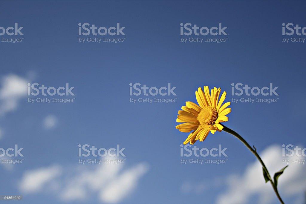 Blume royalty-free stock photo
