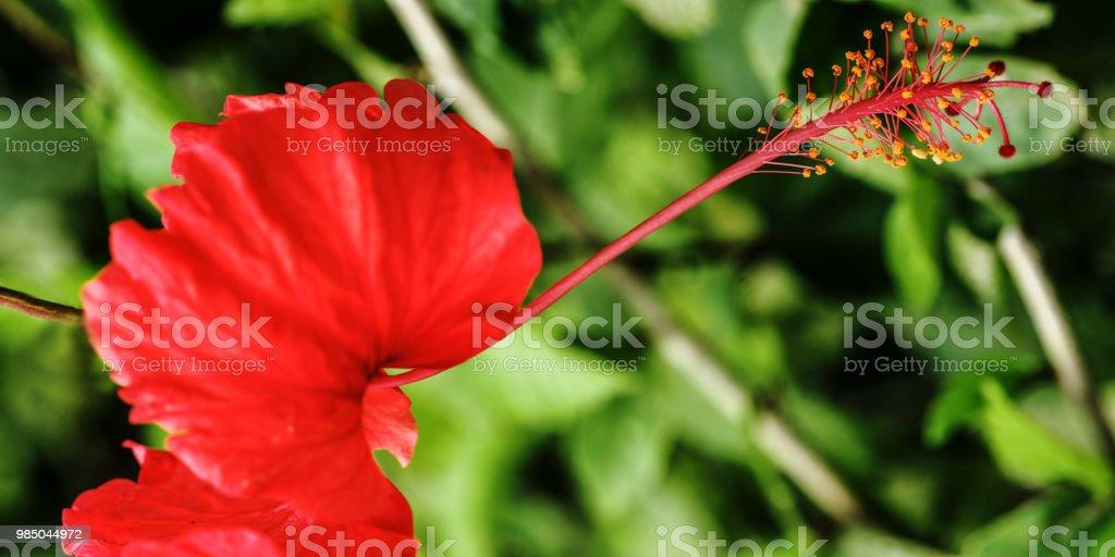 Blume #12 – Foto
