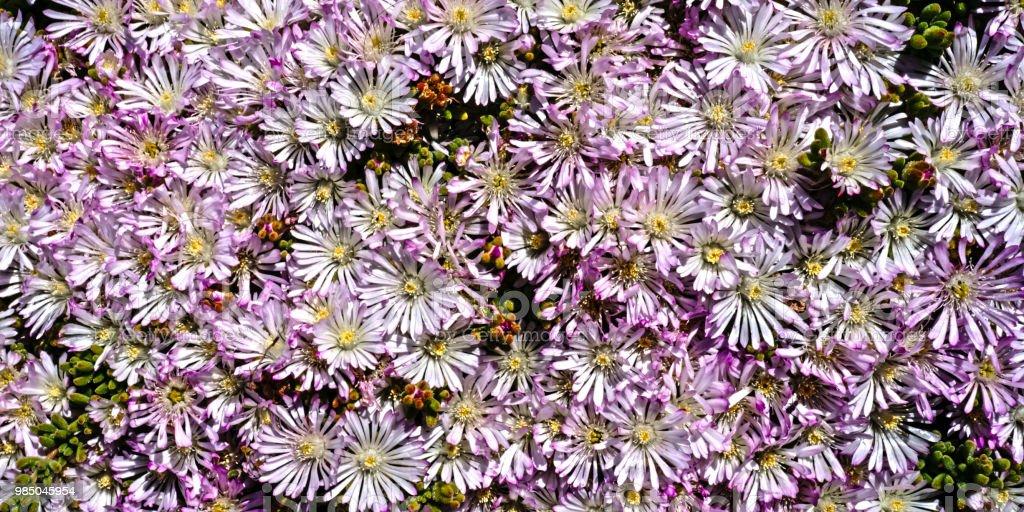 Blume #27 – Foto