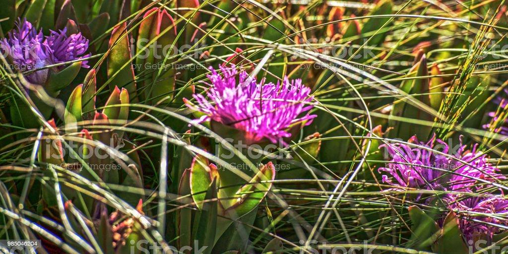 Blume #18 – Foto