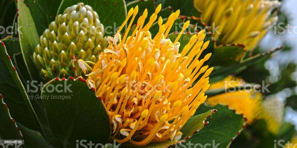 Blume #3 – Foto