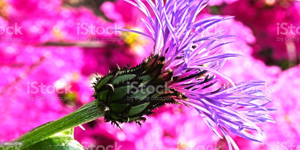 Blume #5 – Foto