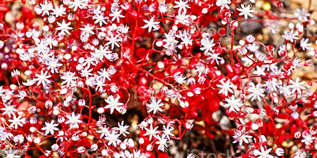 Blume #7 – Foto