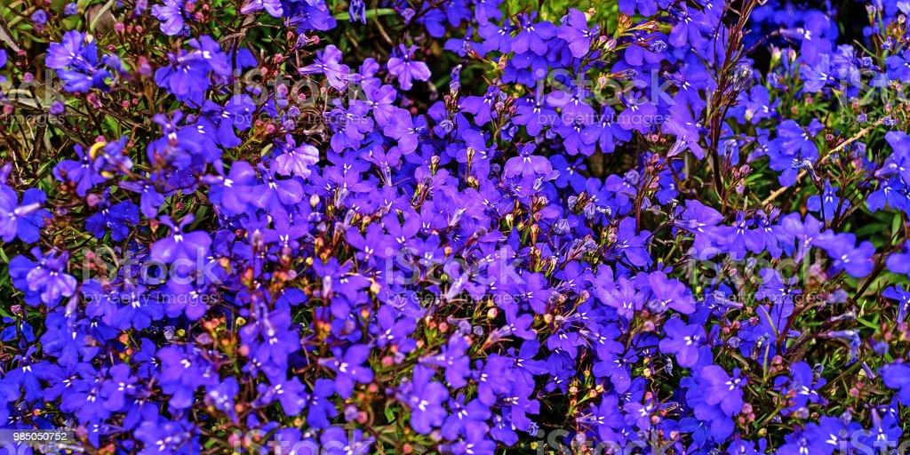 Blume #6 – Foto
