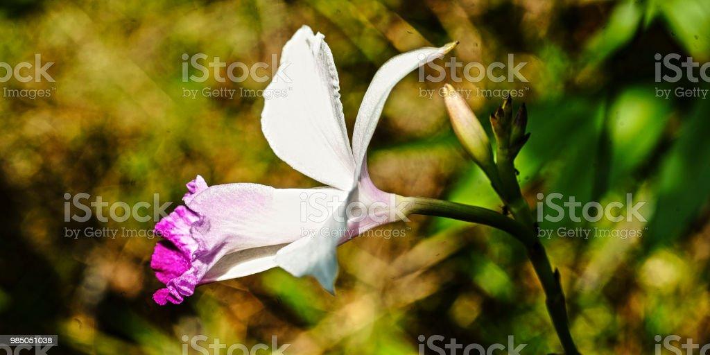 Blume #9 – Foto