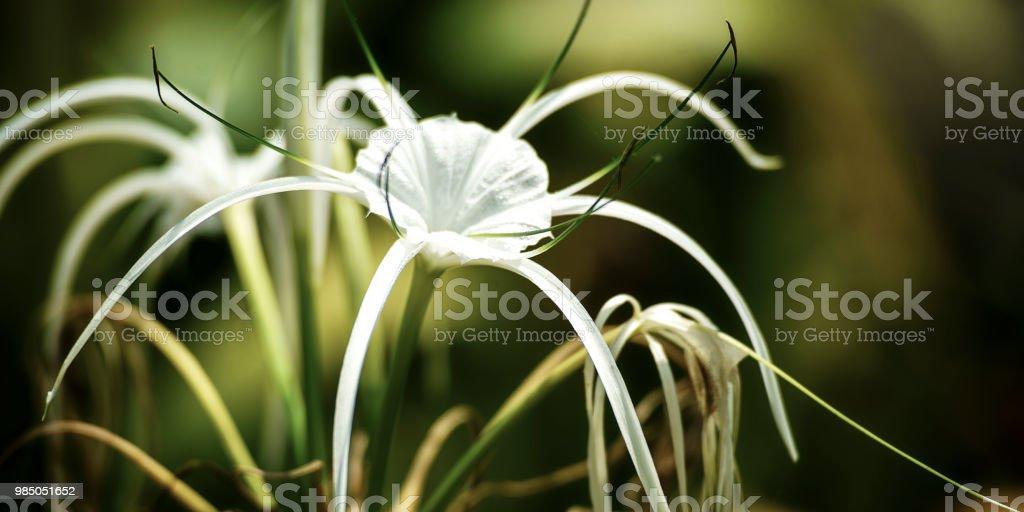 Blume #10 – Foto