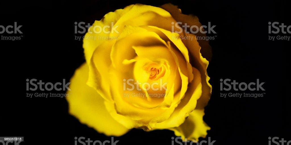 Blume #11 – Foto