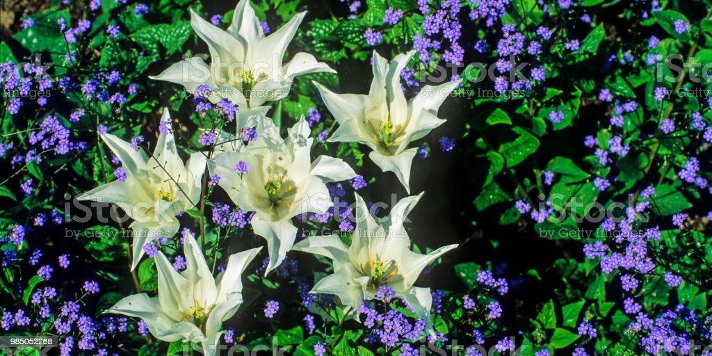 Blume #13 – Foto