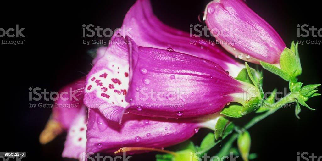 Blume #14 – Foto