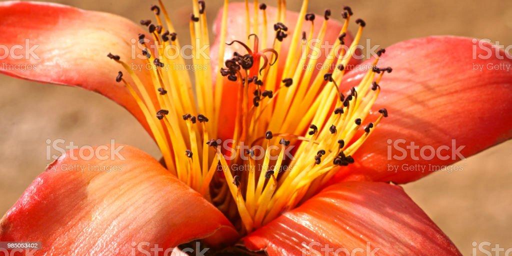 #15 Blume – Foto