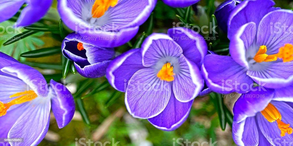 Blume #19 – Foto