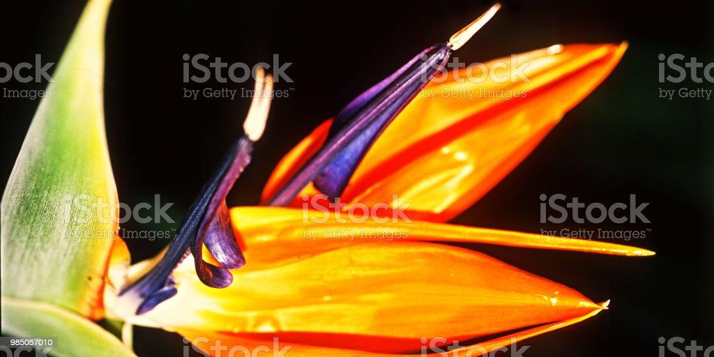Blume #20 – Foto