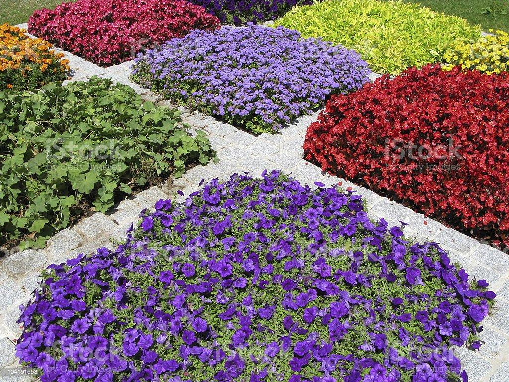 Blumen im Beet royalty-free stock photo
