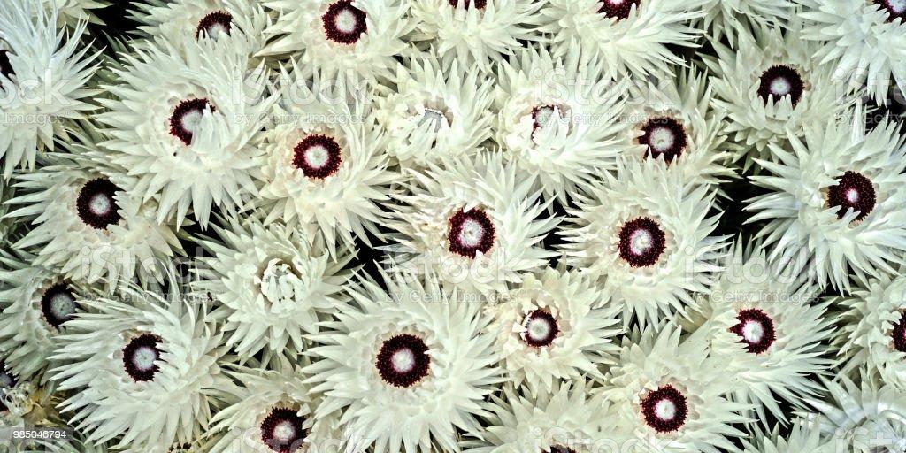 Blumen #2 – Foto