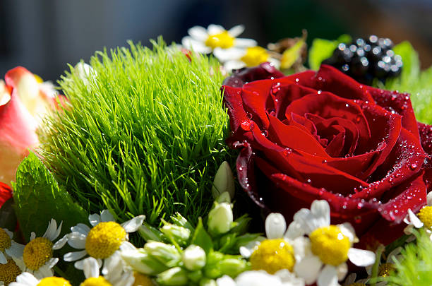 Bunchberry, Bouquet – Foto