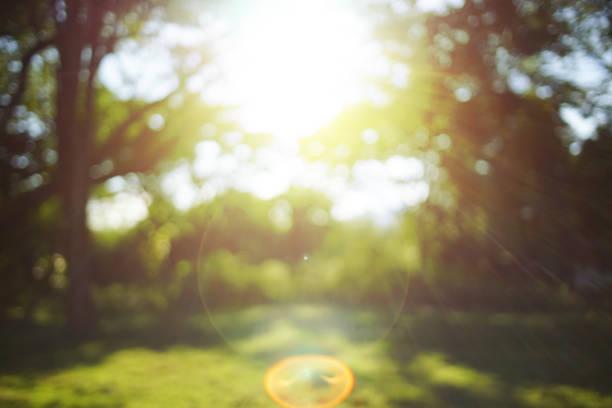 ぼやけた背景 - 木漏れ日 ストックフォトと画像
