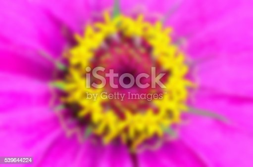 Blur macro shot beautiful exotic yellow carpel on pink petals of Zinnia Elegans, For background colorful nature.