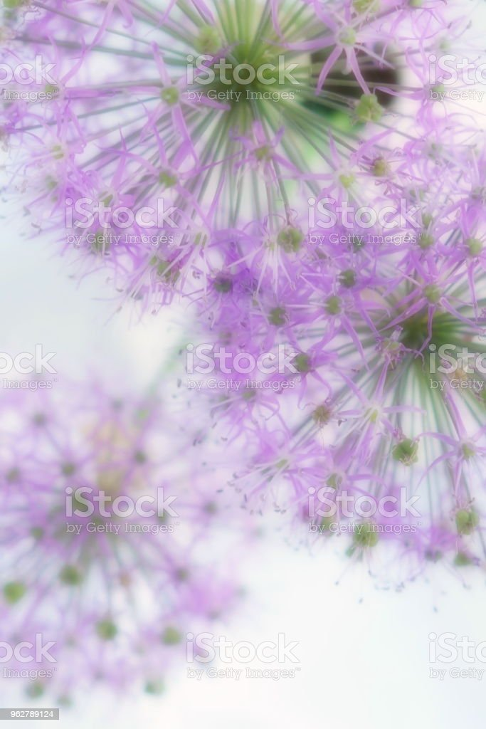 Blur effect, soft focus flowers background with bouquet of purple flowers.Close up. - Foto stock royalty-free di Bellezza