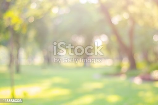 istock blur green bokeh lush garden park outdoor in nature abstract background. 1133830003