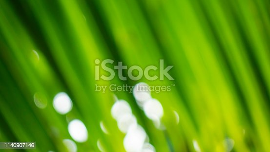 876018792istockphoto Blur green leaf abstract background 1140907146