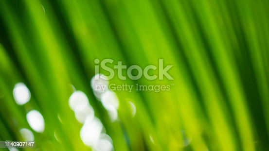 876018792istockphoto Blur green leaf abstract background 1140907147