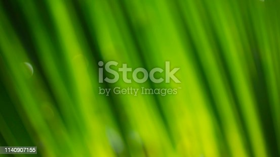 876018792istockphoto Blur green leaf abstract background 1140907155