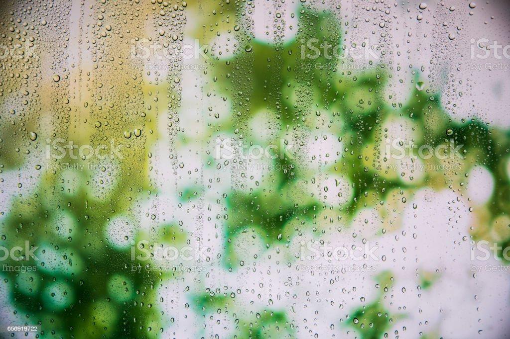 Blur leaves through rainy window