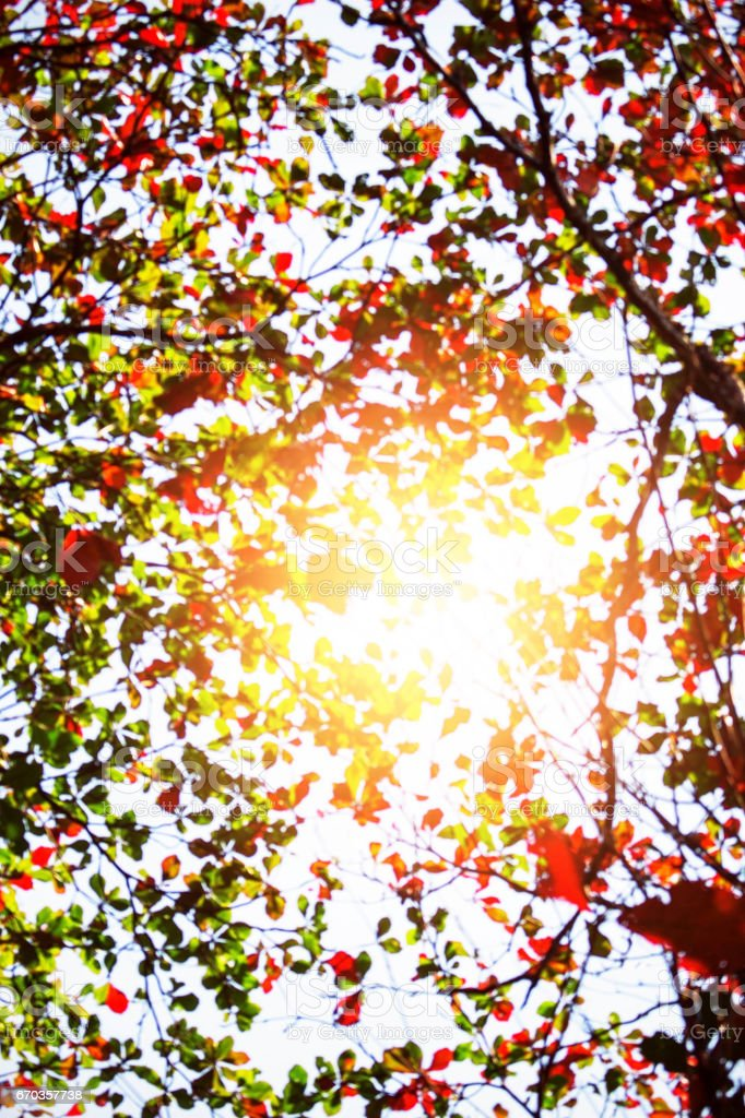 Blur of a tree with sunlight. stock photo