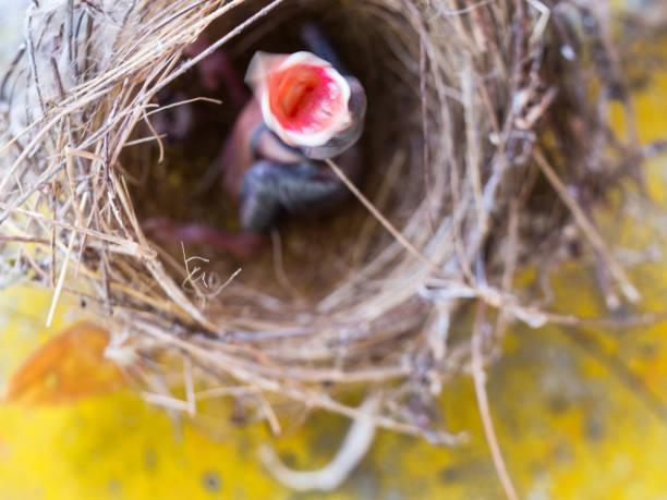 blur der babyvogel warten auf ein lebensmittel - die wilden 20er stock-fotos und bilder