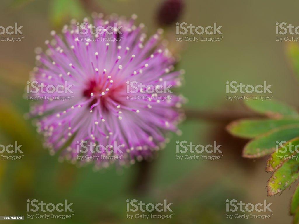 Blur of Purple Unwanted Flora Flower stock photo