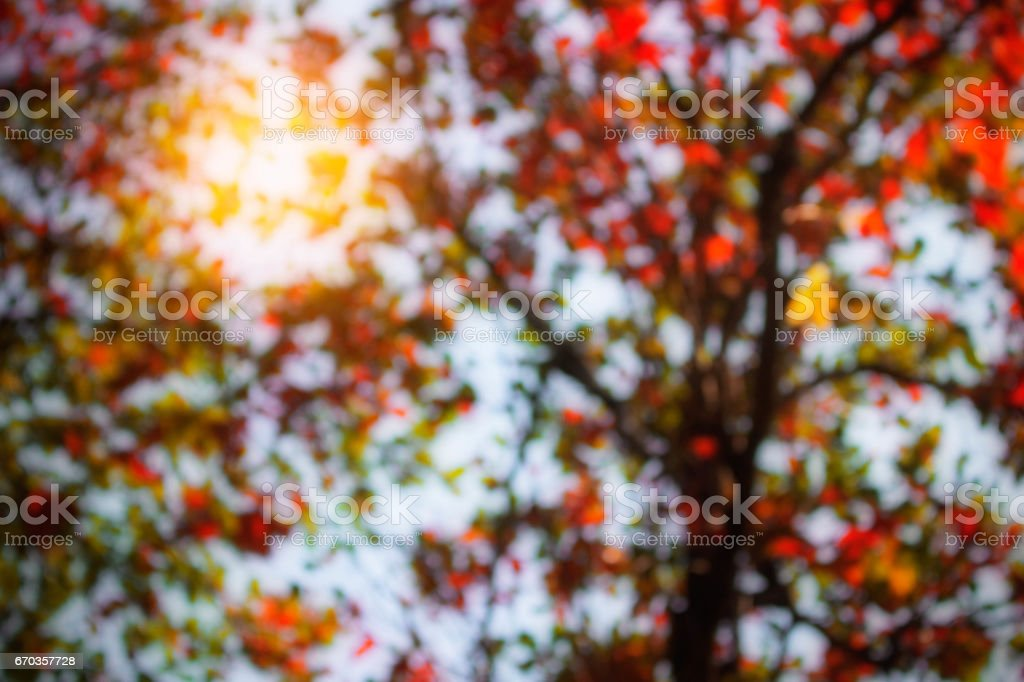 Blur of trees in the autumn. stock photo