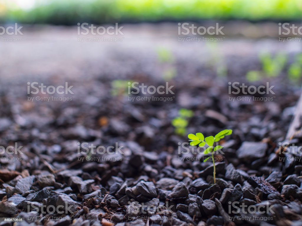 Blur of Unwanted Flora stock photo