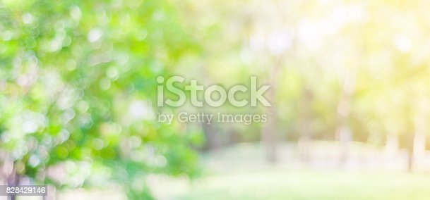 istock Blur park with bokeh light background, nature, garden, fall, autumn spring and summer season 828429146