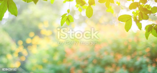 istock Blur park with bokeh light background, nature, garden, fall, autumn spring and summer season 828429152
