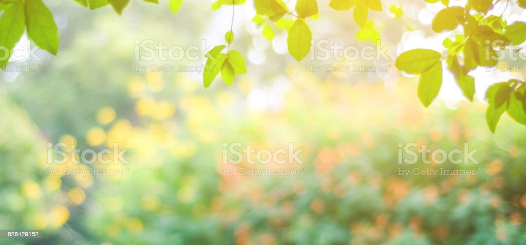 Blur park with bokeh light background, nature, garden, fall, autumn spring and summer season stock photo