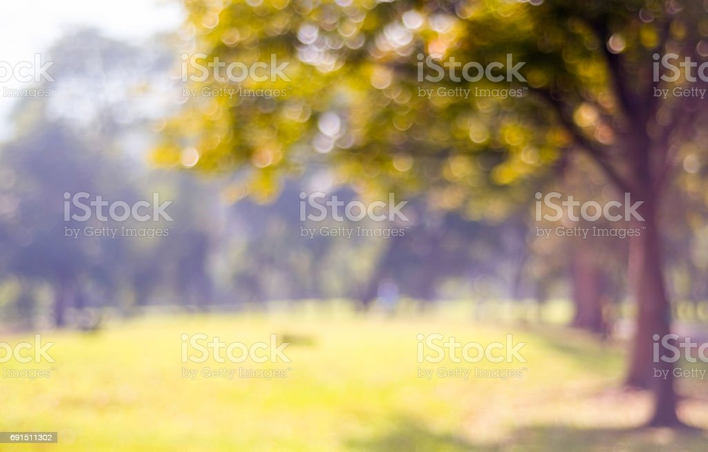 Blur park with bokeh light background, nature, garden, fall, autumn season, golden light, twilight stock photo