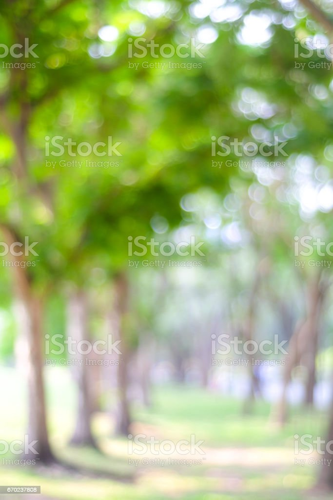 Blur park with bokeh light background, nature, garden, spring and summer season stock photo