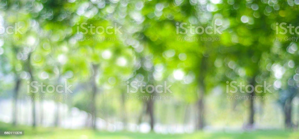 Blur park with bokeh light background, nature, garden, spring and summer season - fotografia de stock