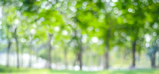 Parque con fondo claro bokeh, naturaleza, jardín, primavera y verano temporada de desenfoque - foto de stock