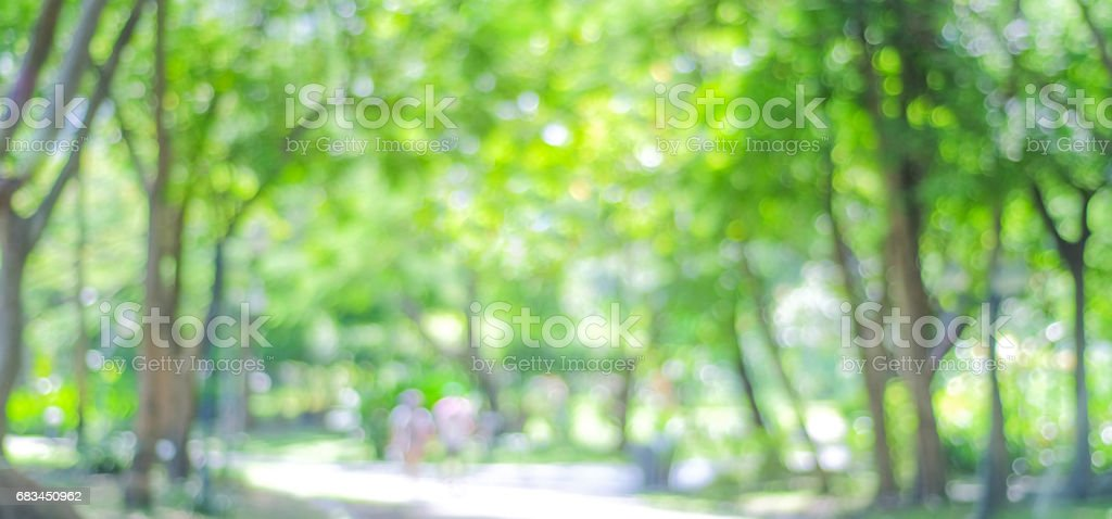 Blur park with bokeh light background, nature, garden, spring and summer season, banner stock photo