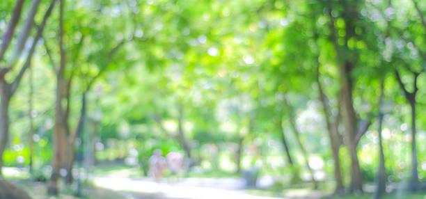 Blur park with bokeh light background, nature, garden, spring and summer season, banner stock photo