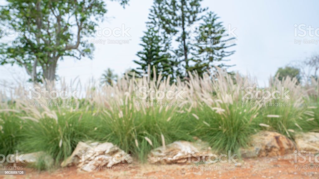 Blured photography of resort or trppical green garden in hotel.