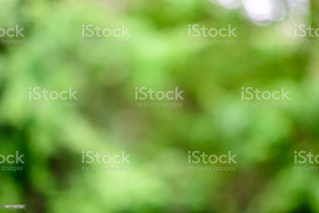 Blurred Abstract Green Foliage Background stock photo