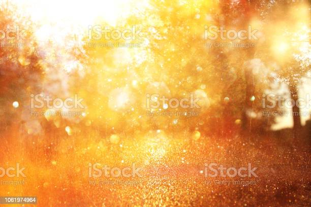 Photo of blurred abstract photo of light burst among trees and glitter golden bokeh lights.