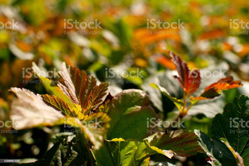Blurred autumn background. stock photo