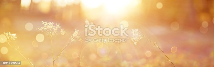 istock Blurred autumn background.Abstract natural background with bokeh and sun flares 1329635514