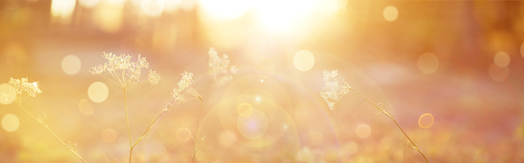 Blurred autumn background. Abstract natural background with bokeh and sun flares. Beautiful delicate soft