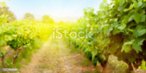 Blurred backdrop with sunny landscape of vineyard. French countryside valley