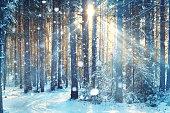 frosty winter landscape in snowy forestblurred background forest snow winter