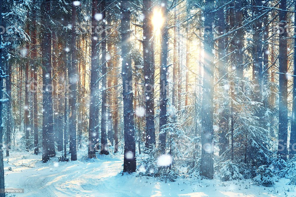 blurred background forest snow winter stock photo